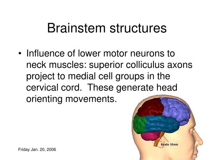 Brainstem structures