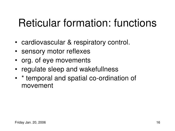 Reticular formation: functions