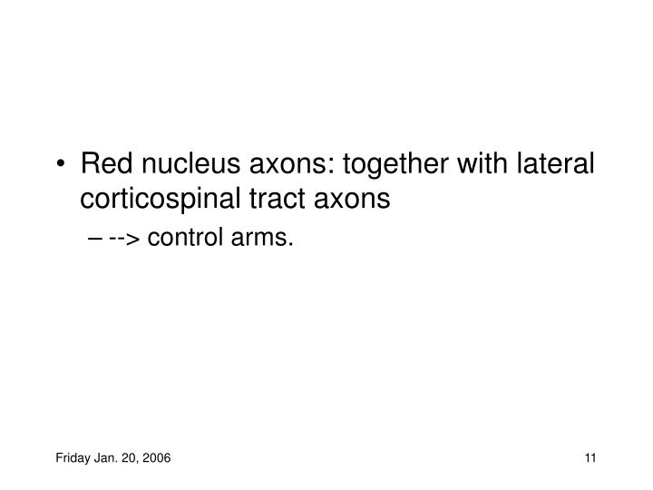 Red nucleus axons: together with lateral corticospinal tract axons