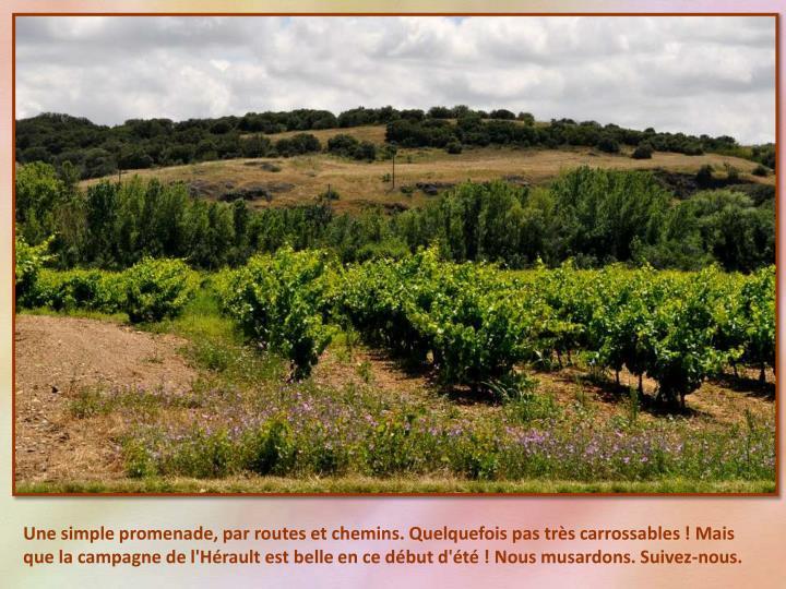 Une simple promenade, par routes et chemins. Quelquefois pas très carrossables ! Mais que la campagne de l'Hérault est belle en ce début d'été ! Nous musardons. Suivez-nous.