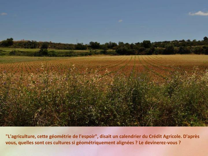 """""""L'agriculture, cette géométrie de l'espoir"""", disait un calendrier du Crédit Agricole. D'après vous, quelles sont ces cultures si géométriquement alignées ? Le devinerez-vous ?"""