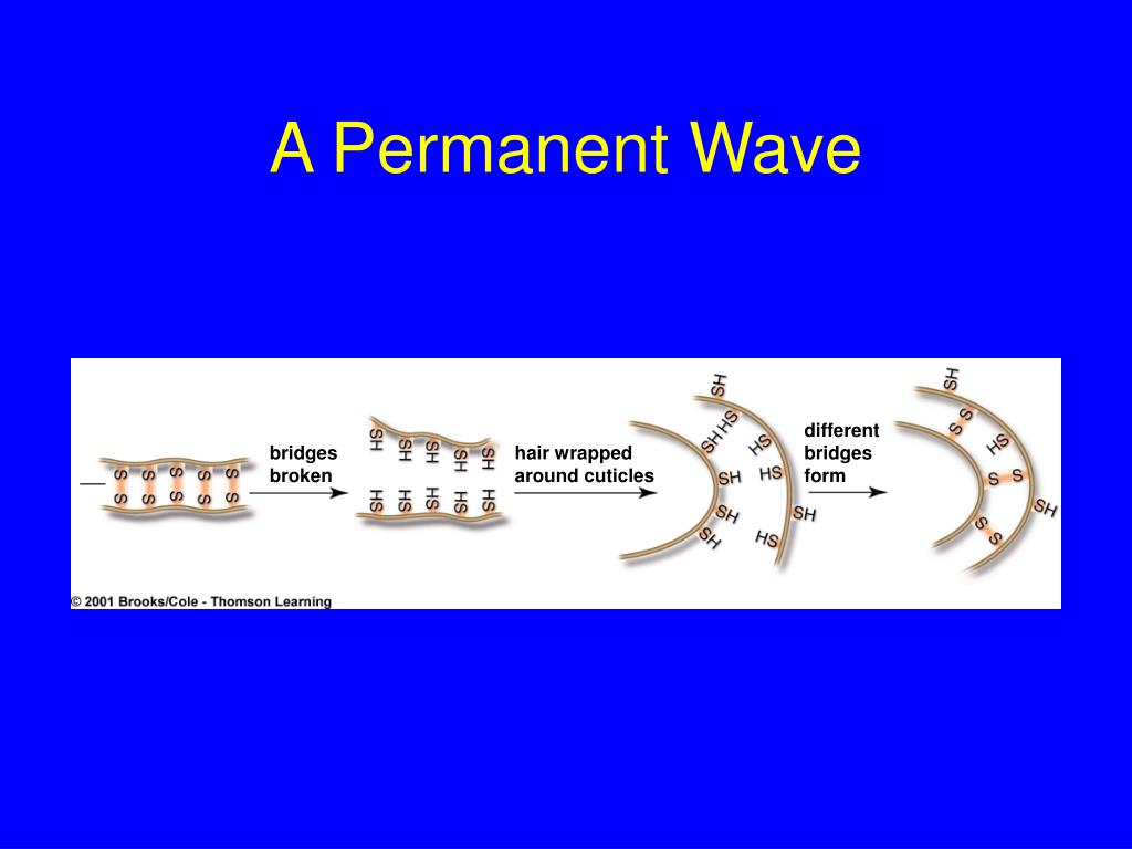 A Permanent Wave