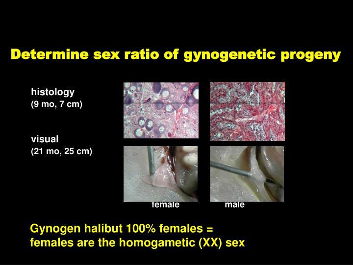 Determine sex ratio of gynogenetic progeny