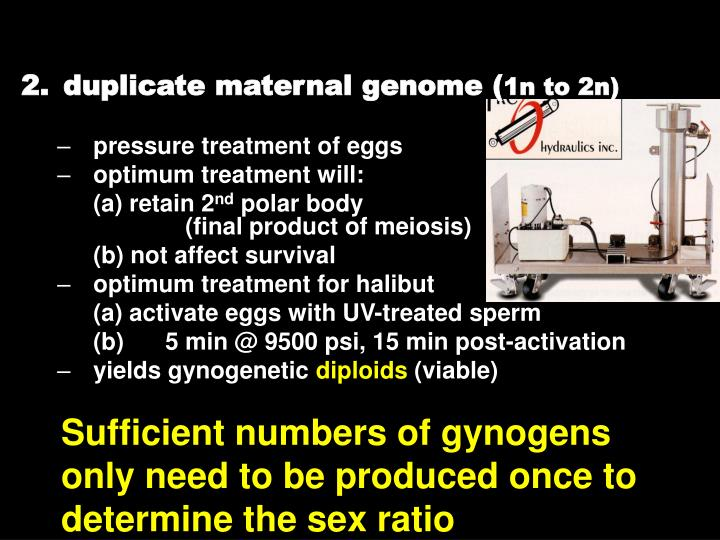 duplicate maternal genome (