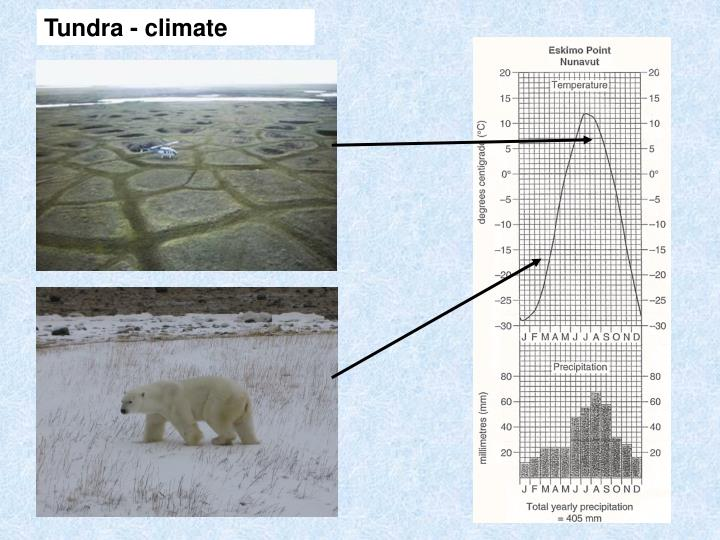 Tundra - climate