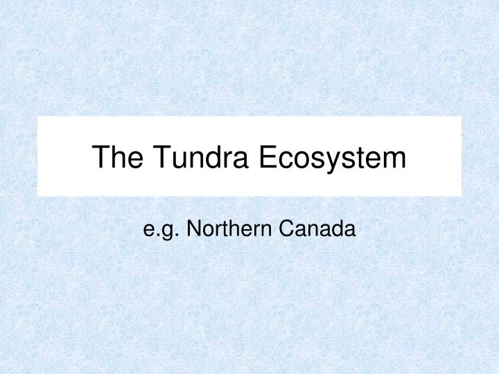 The tundra ecosystem