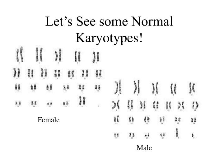 Let s see some normal karyotypes