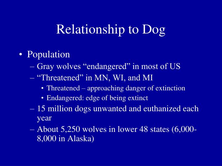 Relationship to Dog