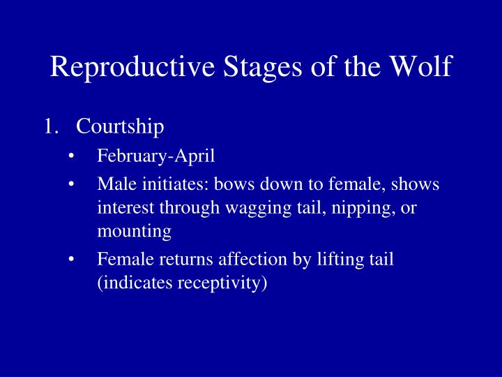 Reproductive Stages of the Wolf