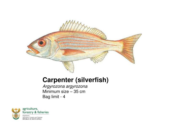 Carpenter (silverfish)