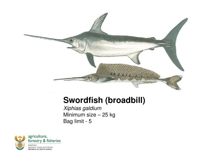 Swordfish (broadbill)