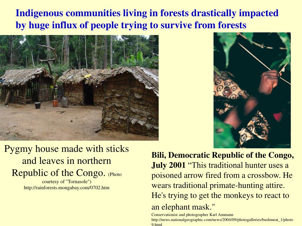 Indigenous communities living in forests drastically impacted by huge influx of people trying to survive from forests