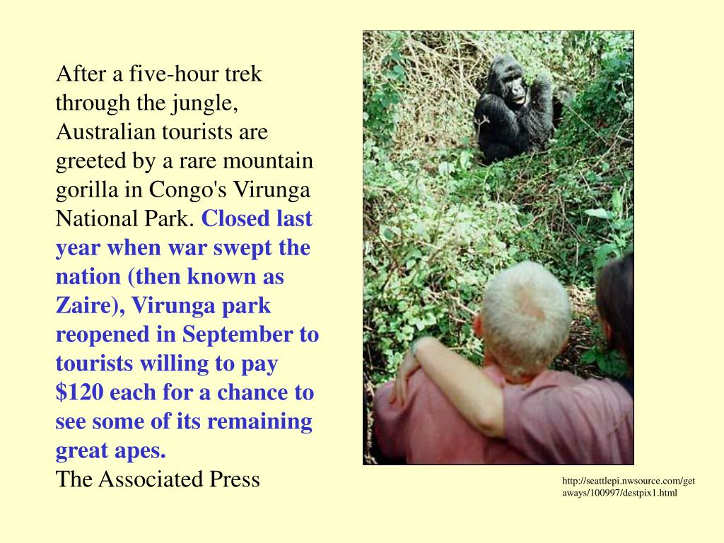 After a five-hour trek through the jungle, Australian tourists are greeted by a rare mountain gorilla in Congo's Virunga National Park.