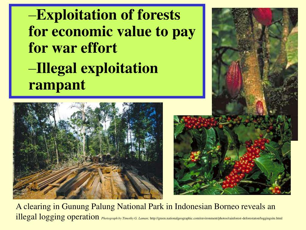 Exploitation of forests for economic value to pay for war effort
