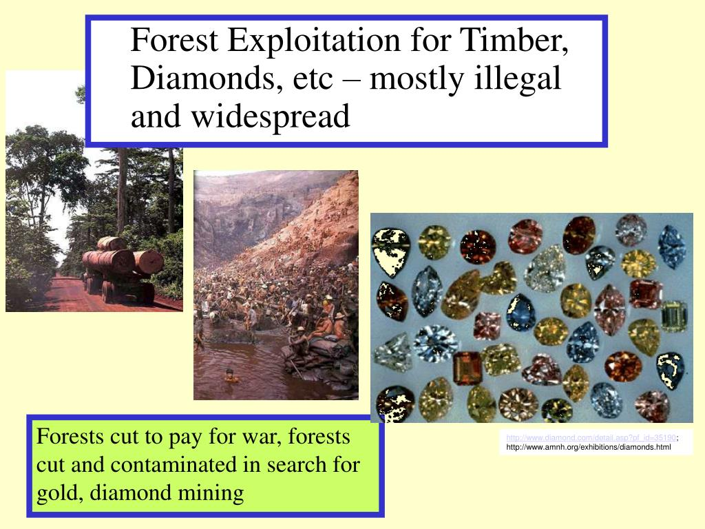 Forest Exploitation for Timber, Diamonds, etc – mostly illegal and widespread