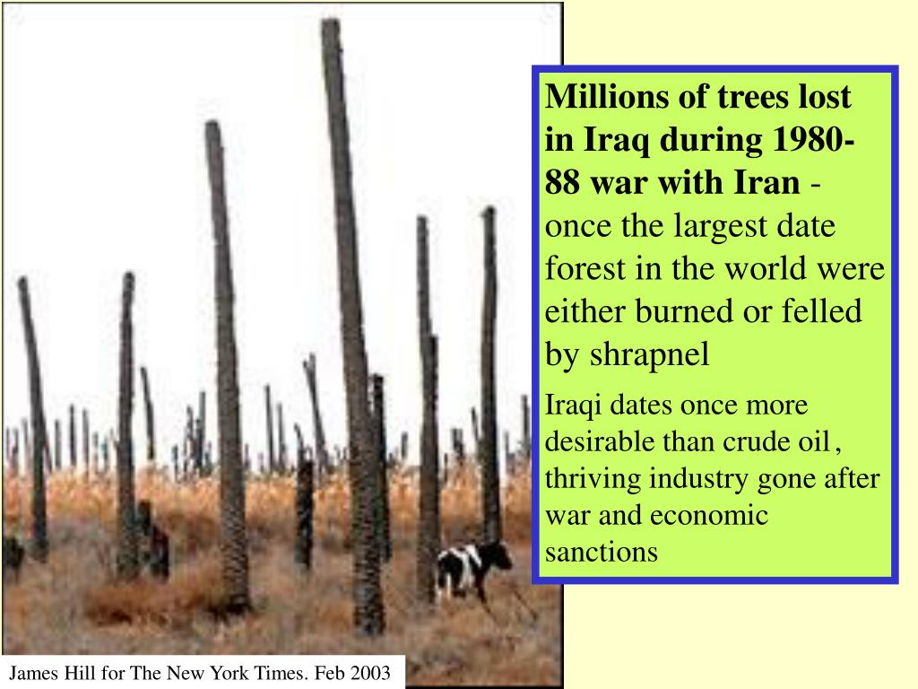 Millions of trees lost in Iraq during 1980-88 war with Iran