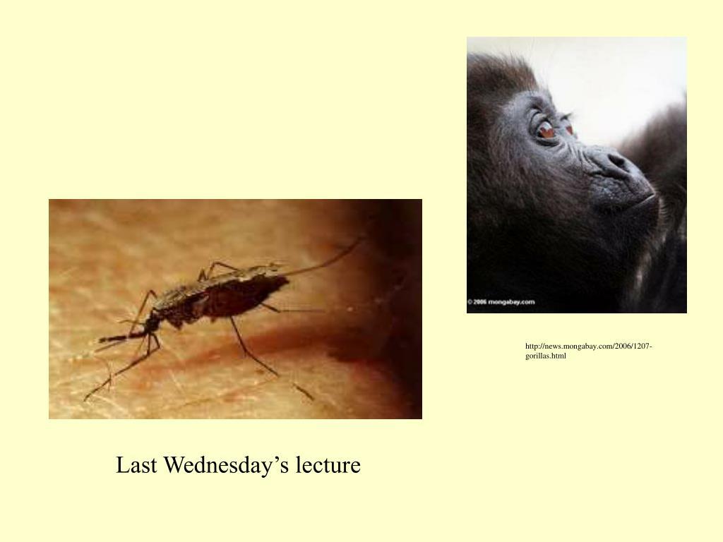 http://news.mongabay.com/2006/1207-gorillas.html