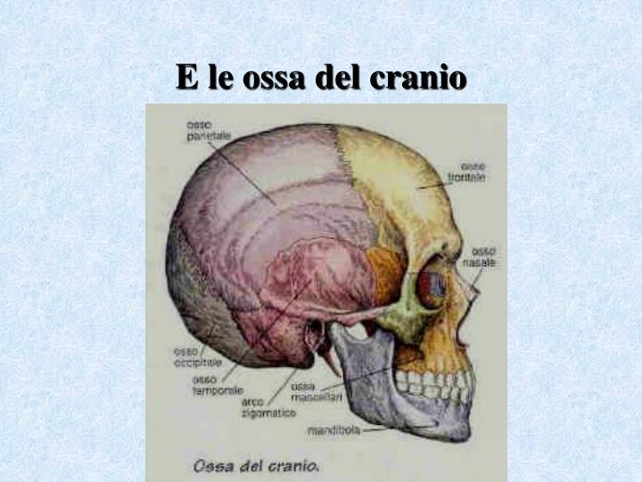 E le ossa del cranio