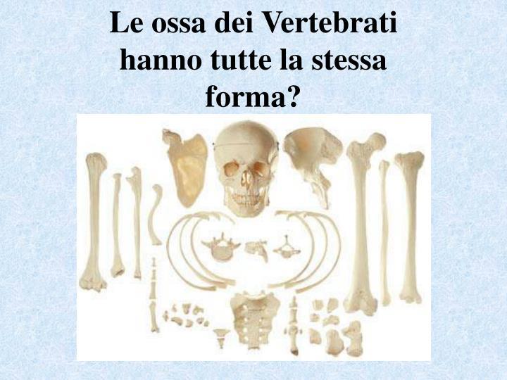 Le ossa dei Vertebrati hanno tutte la stessa forma?