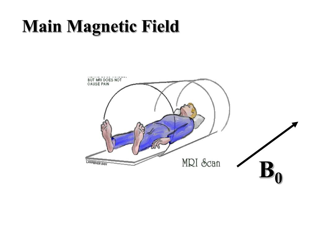 Main Magnetic Field