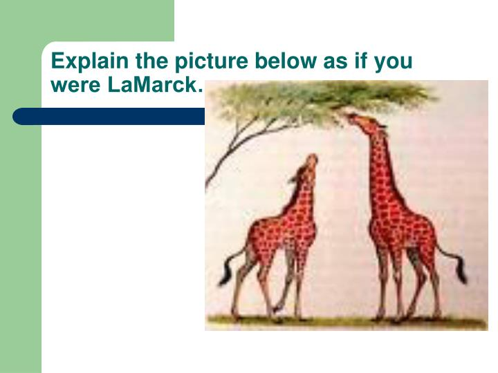Explain the picture below as if you were LaMarck…