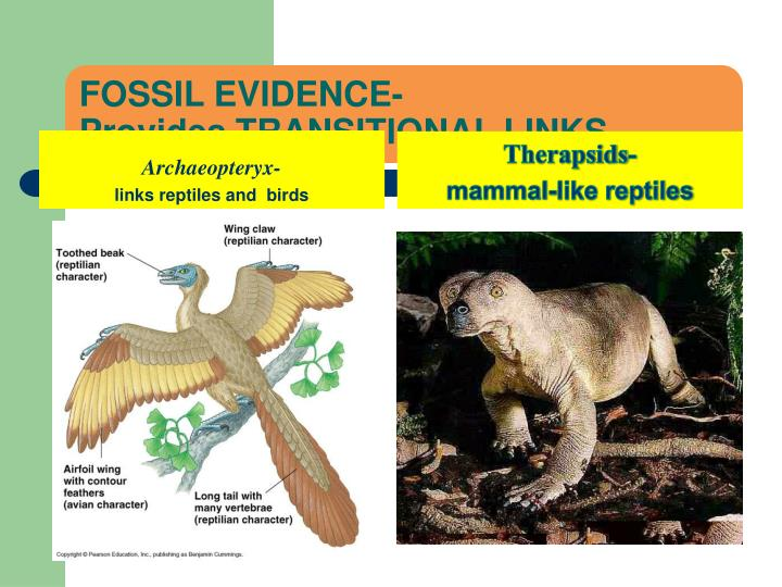 FOSSIL EVIDENCE-