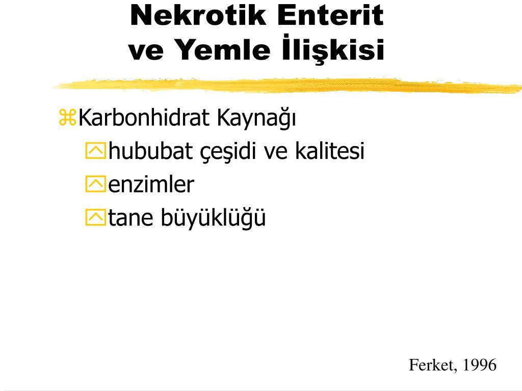 Nekrotik Enterit