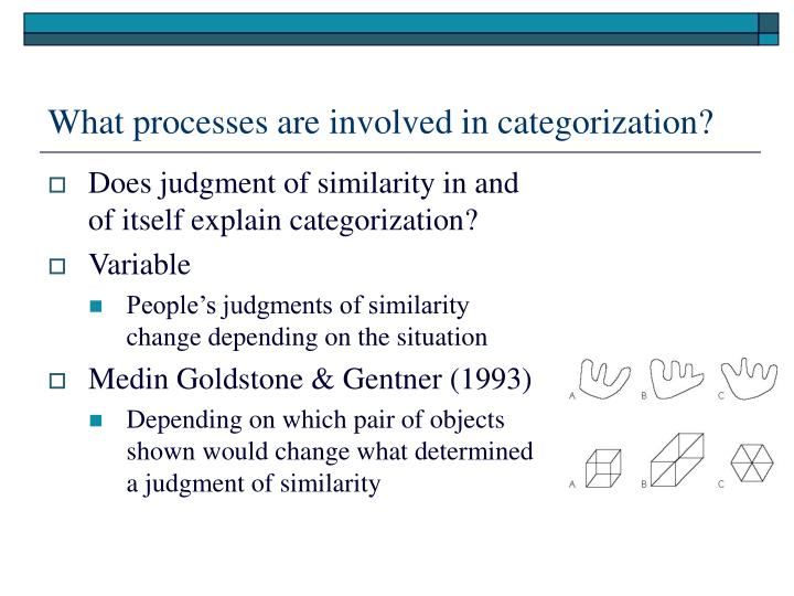 What processes are involved in categorization?