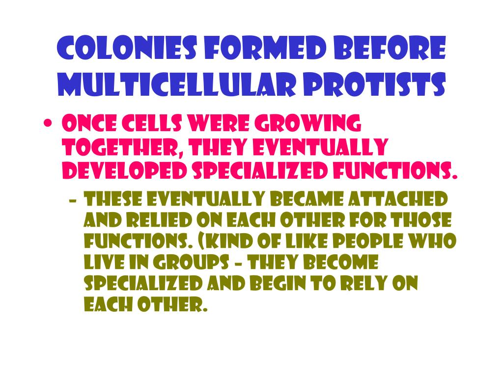 Colonies formed before multicellular Protists