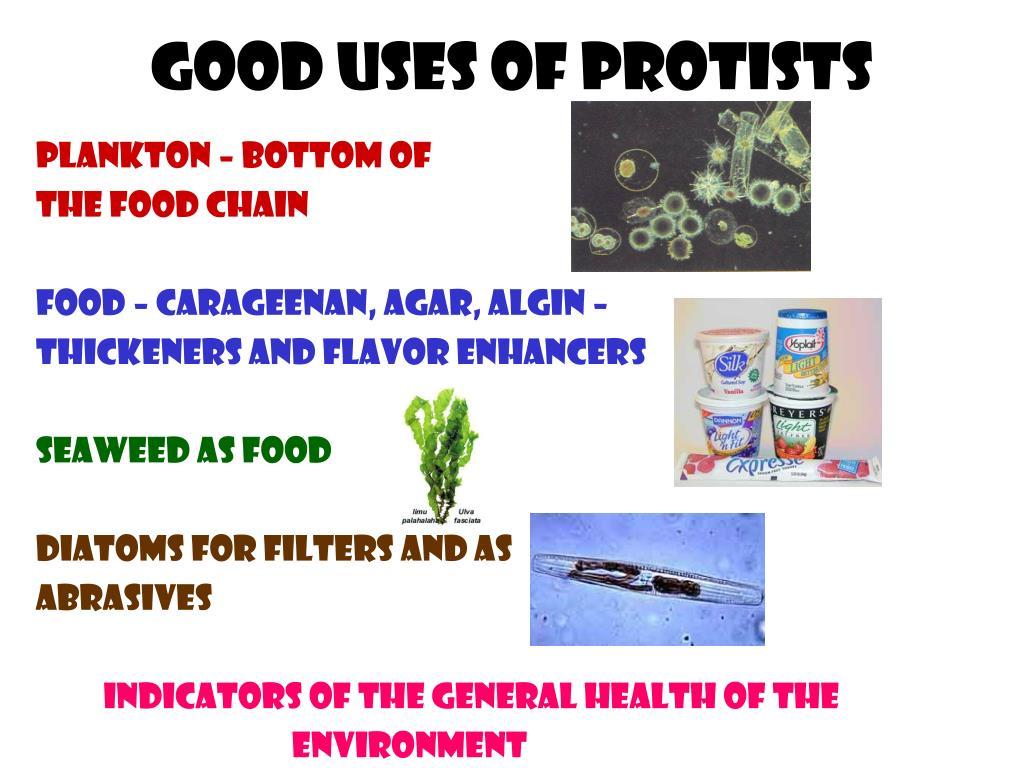 Good uses of protists