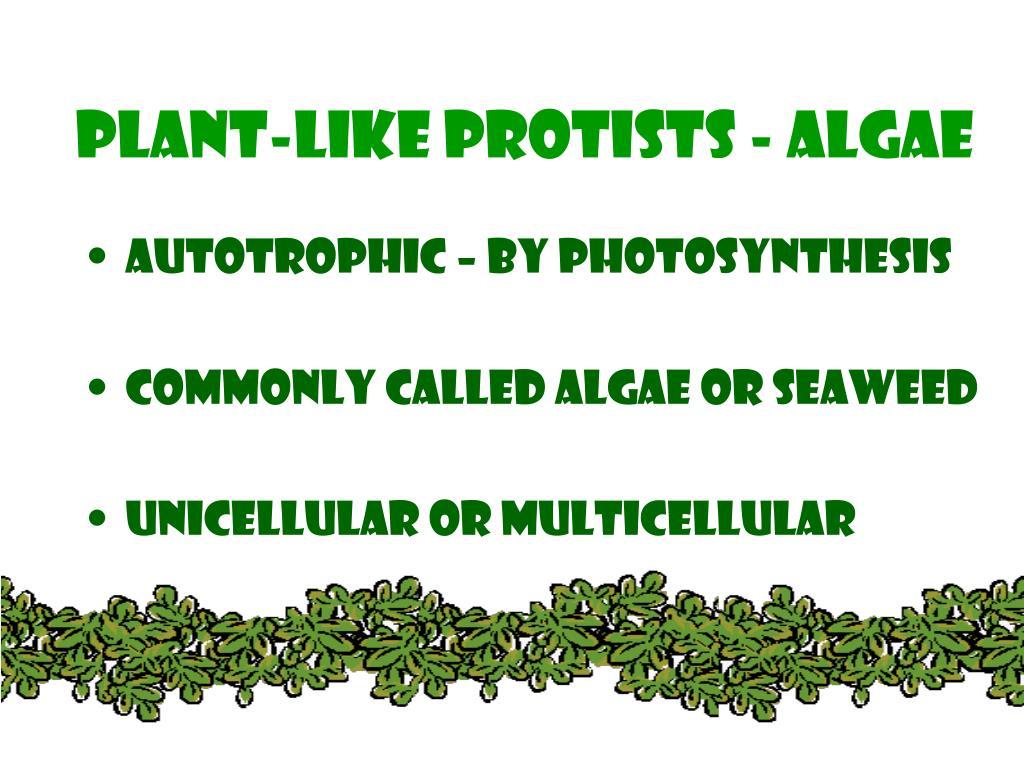 Plant-Like protists - algae
