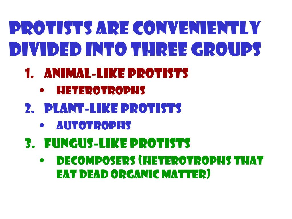 Protists are conveniently divided into three groups