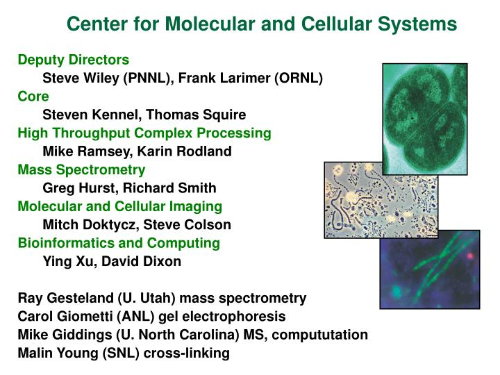 Center for Molecular and Cellular Systems