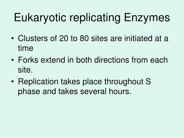 Eukaryotic replicating Enzymes
