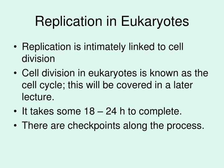 Replication in eukaryotes