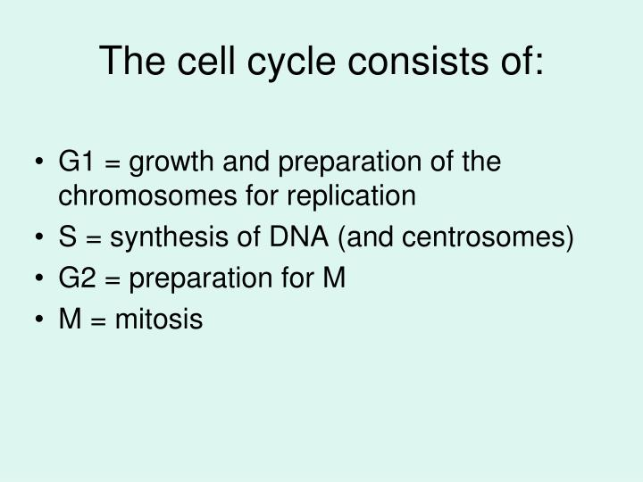 The cell cycle consists of: