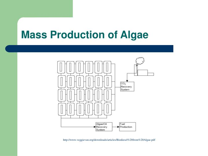 Mass Production of Algae