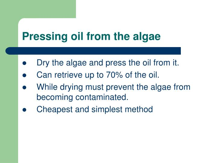 Pressing oil from the algae