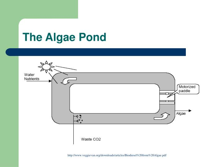 The Algae Pond