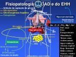 fisiopatologia da cad e do ehh
