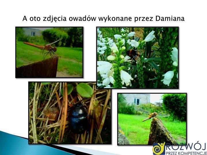 A oto zdjęcia owadów wykonane przez Damiana