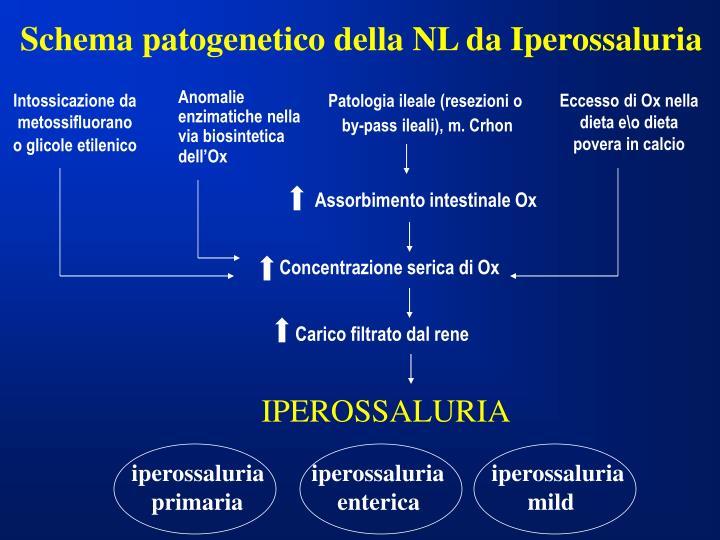 Schema patogenetico della NL da Iperossaluria
