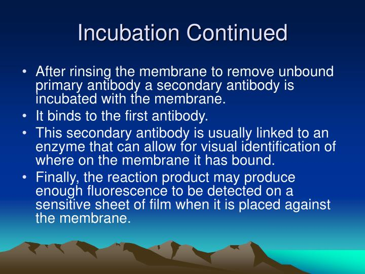 Incubation Continued