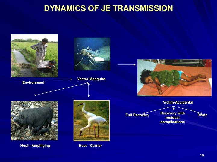DYNAMICS OF JE TRANSMISSION