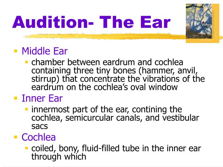Audition- The Ear