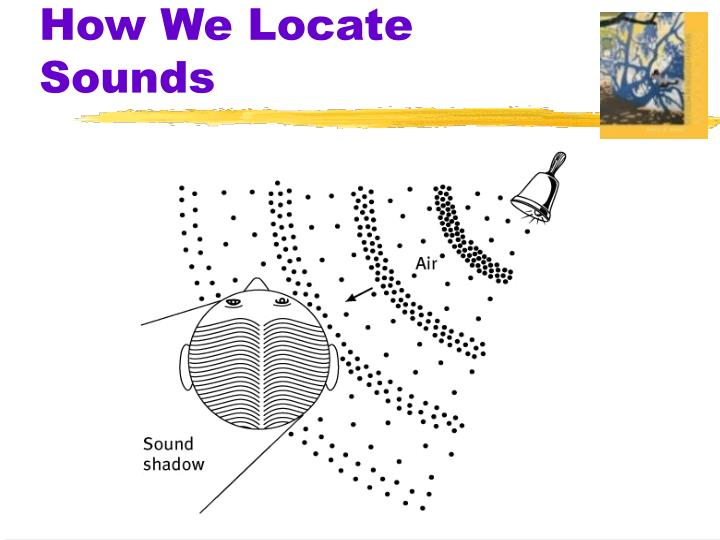 How We Locate Sounds