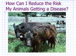 how can i reduce the risk my animals getting a disease