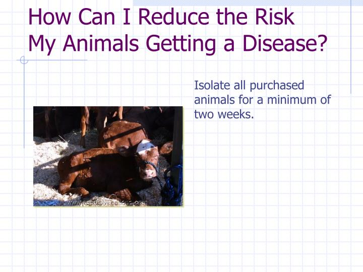 How Can I Reduce the Risk My Animals Getting a Disease?