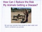 how can i reduce the risk my animals getting a disease6
