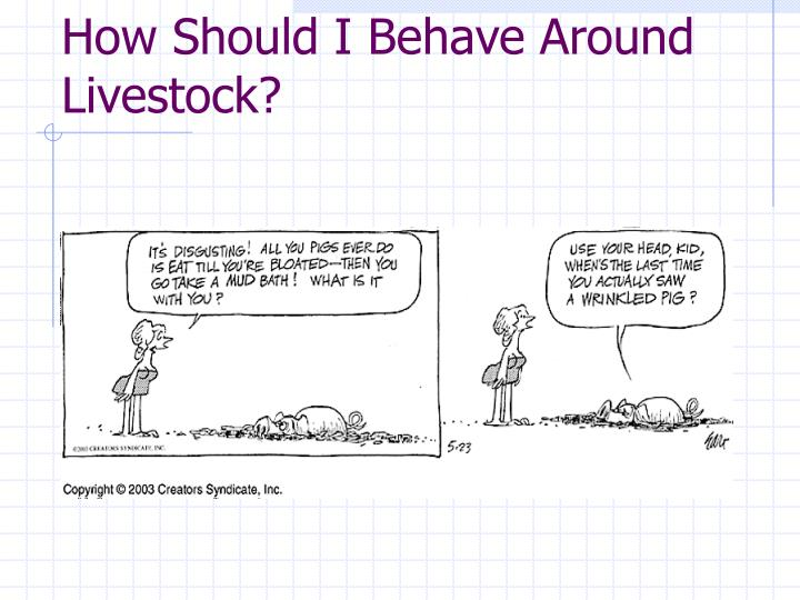 How Should I Behave Around Livestock?